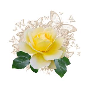 Клипарт с желтой розой, Картинки клипарт