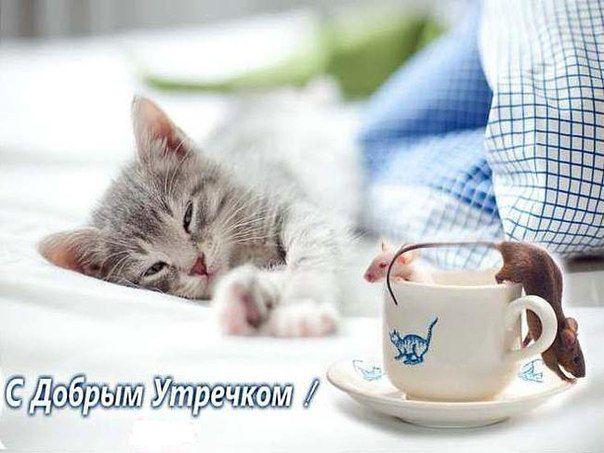 С добрым утром котик открытки