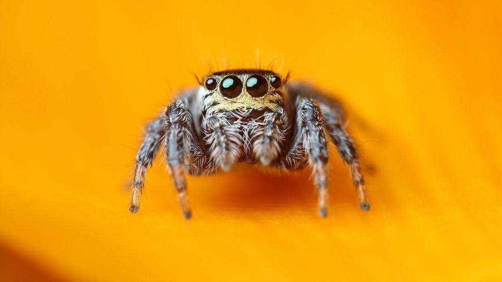 Картинки по запросу пауки милый