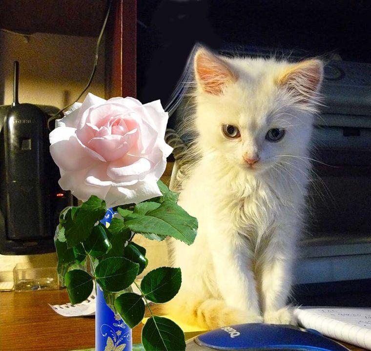 это картинки котята с цветами роз пляжи