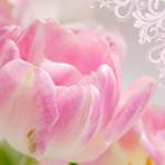 Тюльпаны смайлик