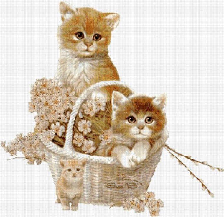 картинки с котятами блестяшки многолетники компактным или