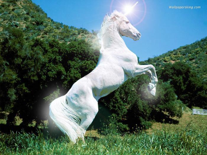 Лошади-это чудо,Лошади-это наш мир ВКонтакте