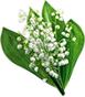 Прекрасные ландыши с зелеными листочками