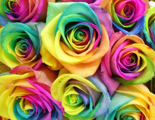 Картинки по запросу цветы фото