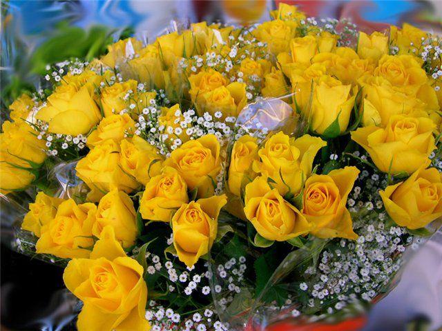 Розы 2 - Страница 4 - Форум