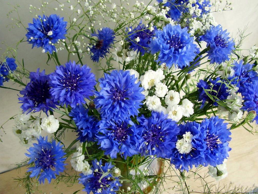 Одноклассники новости могоча цветы