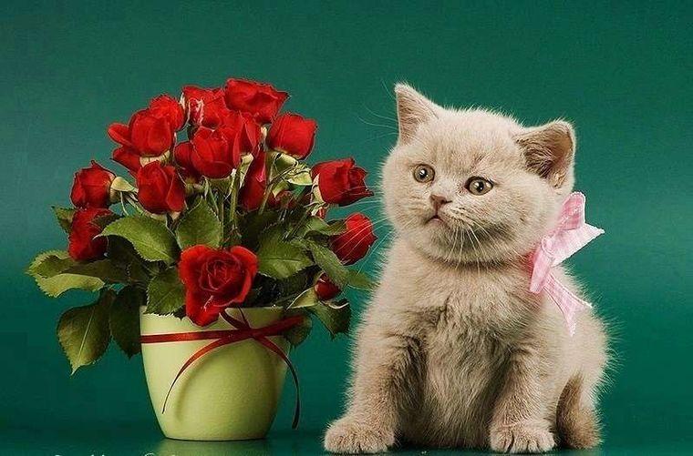 открытки с днем рождения с розами котятами знает