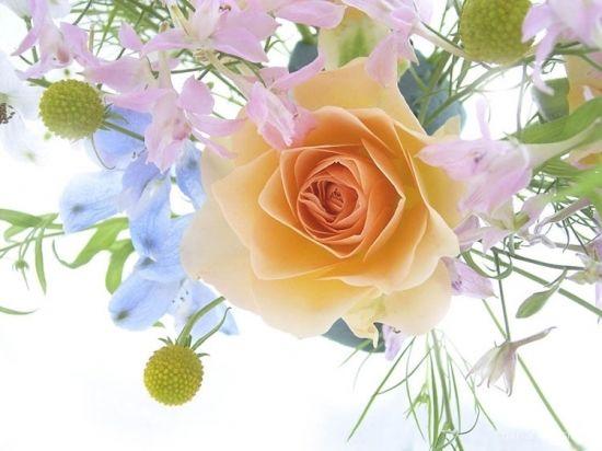Свадебный букет роз - Розы картинки для поздравления