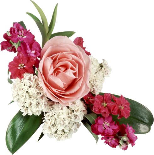 Photoshopia.su Версия для печати Цветы в PNG формате
