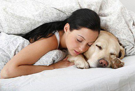 Картинки по запросу человек и собака спят вместе в лесу
