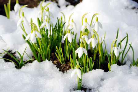 Картинки по запросу картинка весна пришла