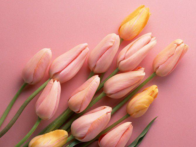 Цветы - Фото цветов