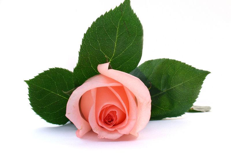 Картинки по запросу цветы в подарок