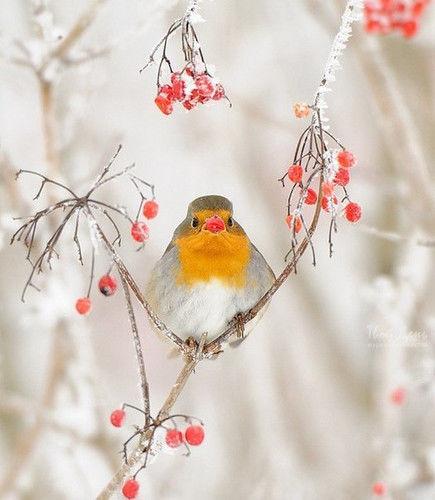 Зима-волшебница картинки