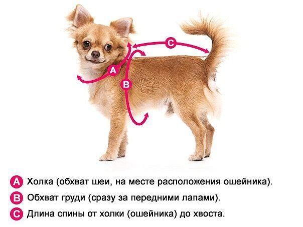 как снять мерки  с собачки
