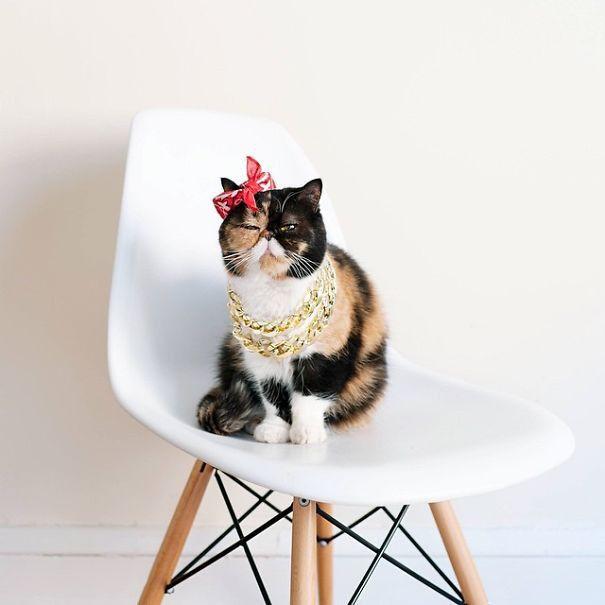 Самые известные коты интернета  котики, интернет, знаменитости