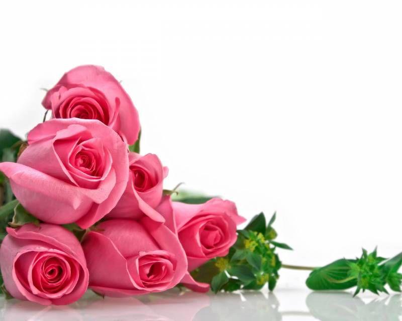 Розовые розы - Цветы