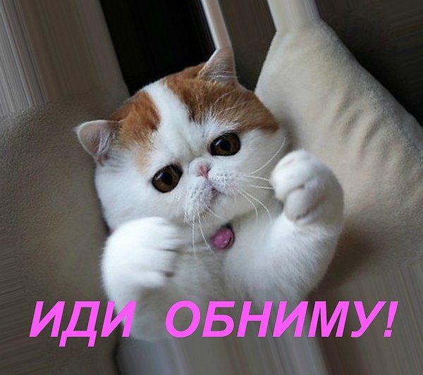 Картинки хочу обнимашек с котиками