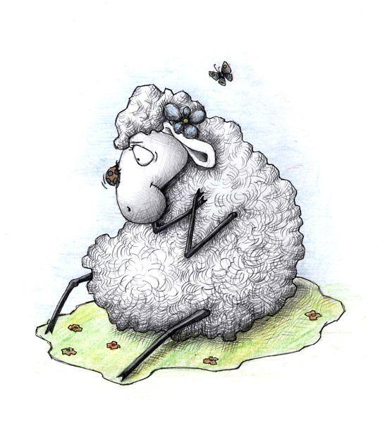 Картинки, картинки овечки прикольные