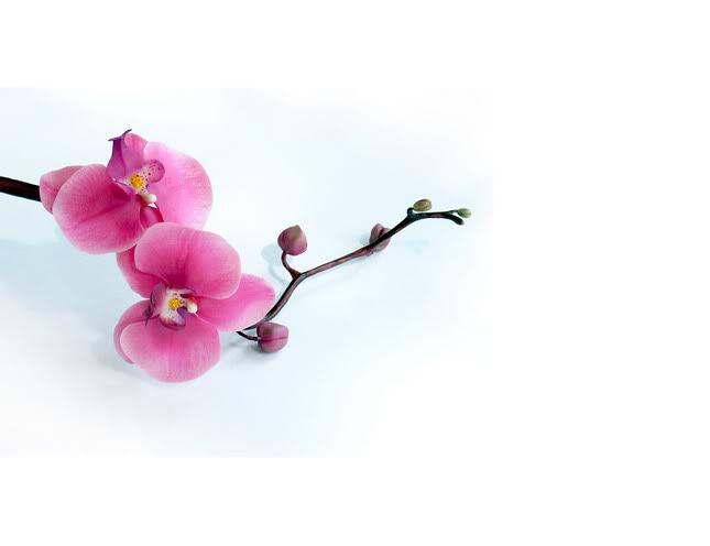 Fleur - искусство керамической флористики
