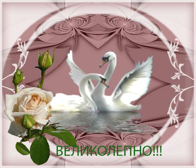 https://cs8.livemaster.ru/storage/8a/48/6d71b45a56806daace4d5f025fk5.jpg