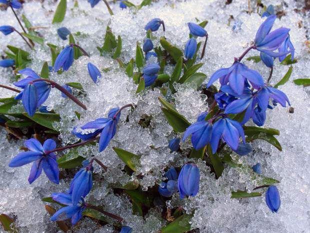 Картинки по запросу картинки  скорей бы весна