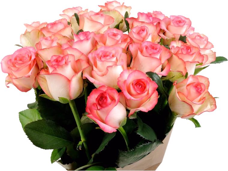 нас сталкивался картинки с букетами розовых роз нойера называют одним