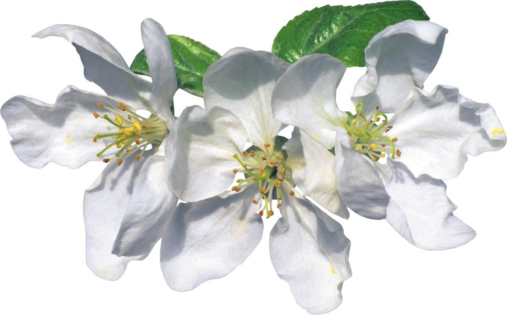 Картинки по запросу с весной цветы