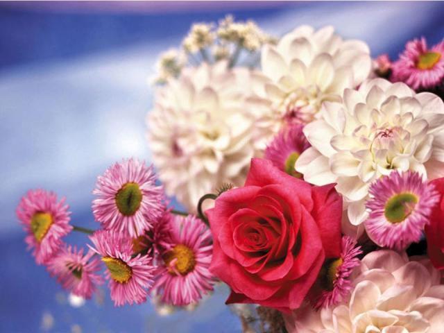Обои рабочего стола - нежные и красивые цветы - 5 Апреля 2010 - tell.yes