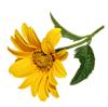Весенние цветы смайлик