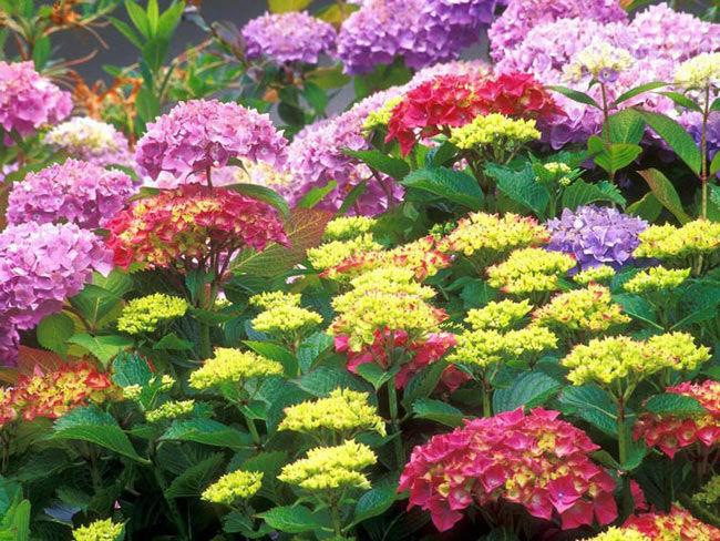 Низкорослые садовые цветы: подборка лучших