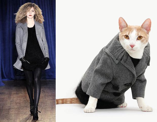 осложнением, фото кошка в пальто все химию изучают