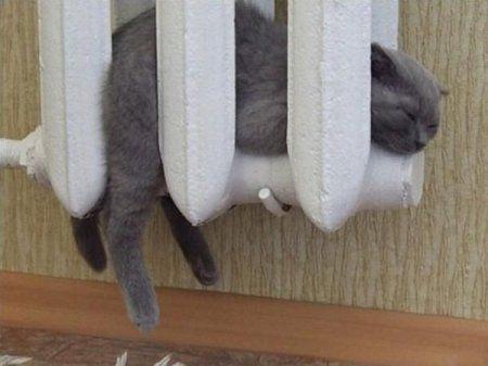 Картинки по запросу смешные фото кошек