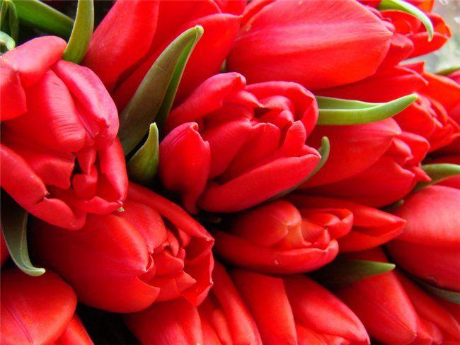 Обои Букет красных тюльпанов, обои для рабочего стола Букет красных тюльпанов