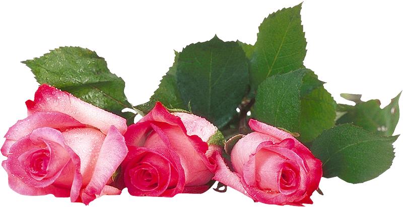 Открытки красивые розы спасибо