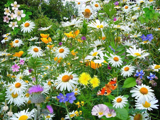 Красота растений летом 313