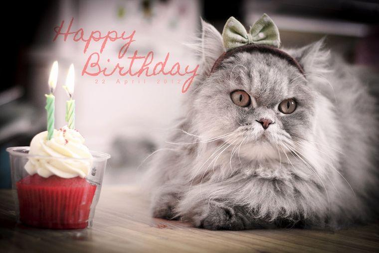 Картинки с днем рождения с кошкой, детей для