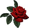 Прекрасная роза в подарок
