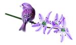 Сиреневая птица на сиреневой ветке