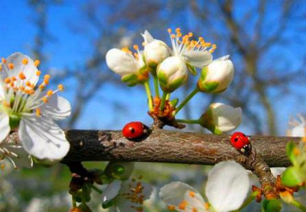 Поздравляем с Новой весной ! Пусть для Тебя цветут Её цветы !