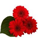 Разные цветы картинки