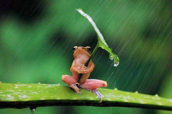 Картинки по запросу смешные картинки под зонтом