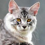 Коты, кошки, котята картинки